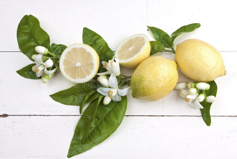 Lemons with blossoms. Fresh juicy lemons with leaves and blossoms on a rustic wooden table stock image