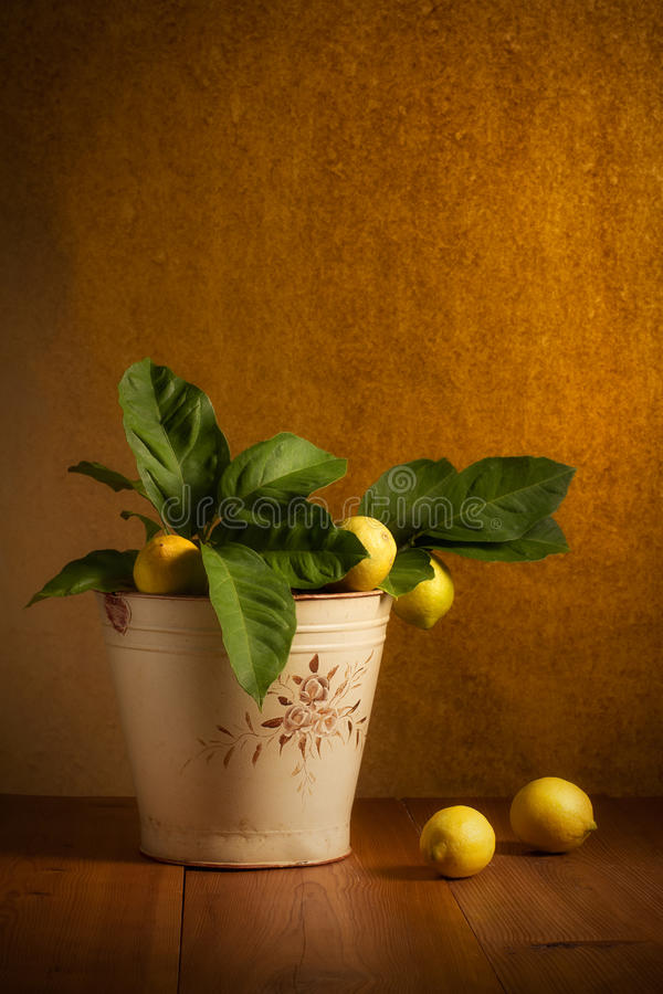 Download Lemons stock image. Image of fruit, organic, many, color - 33584679