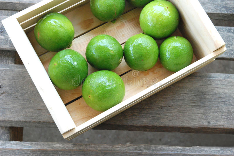 Lemons green royalty free stock image