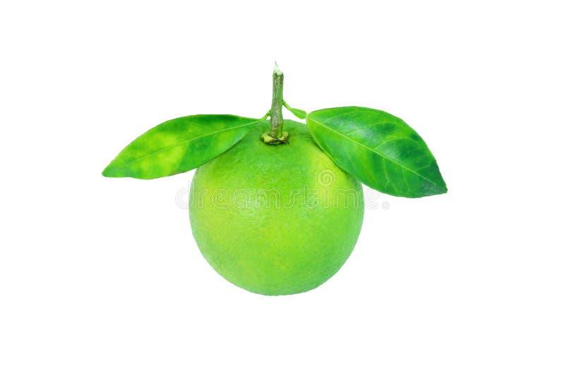 lemons lime Sammansättning med sidor som isoleras på vit royaltyfri fotografi