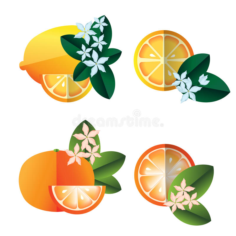 Lemons and oranges illustration. Lemon halves, oranges, flowers and leaves illustration on white stock illustration