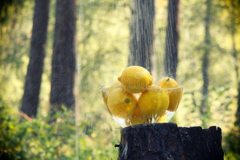 Lemons in the rain royalty free stock photo