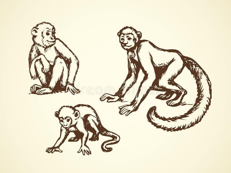 Lemur r?wnie? zwr?ci? corel ilustracji wektora royalty ilustracja