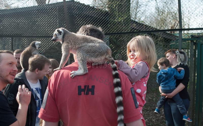 Lemur zit op de schouders van een man en een klein meisje in de armen van de vader die een citroen stroopt stock fotografie
