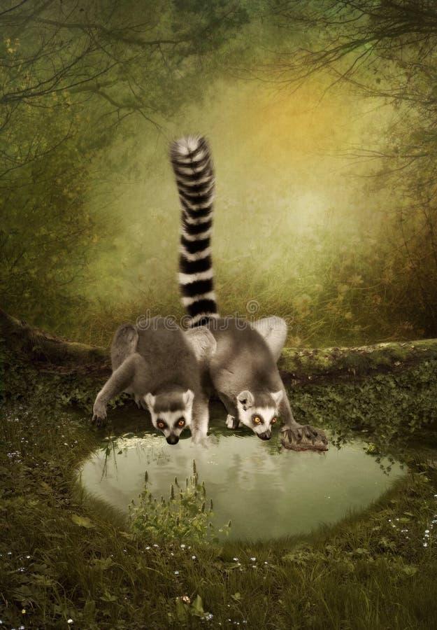 Lemure divertenti fotografia stock