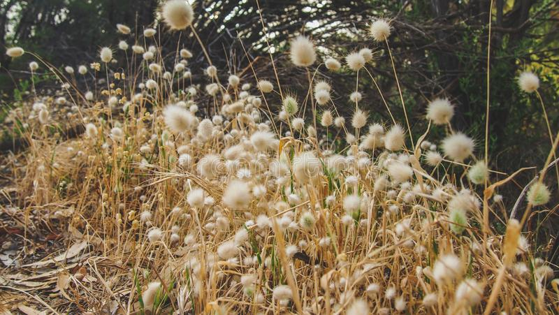 Len Howard Conservation Park perto de Mandurah, Austrália Ocidental imagens de stock