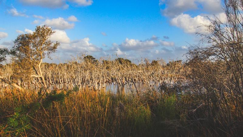 Len Howard Conservation Park perto de Mandurah, Austrália Ocidental foto de stock royalty free