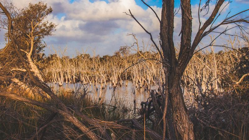 Len Howard Conservation Park perto de Mandurah, Austrália Ocidental foto de stock