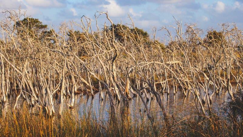 Len Howard Conservation Park perto de Mandurah, Austrália Ocidental imagem de stock