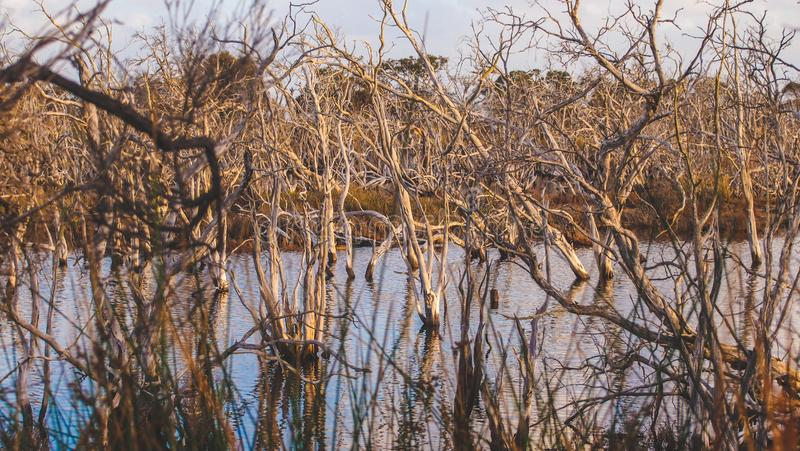 Len Howard Conservation Park vicino a Mandurah, Australia occidentale fotografia stock libera da diritti