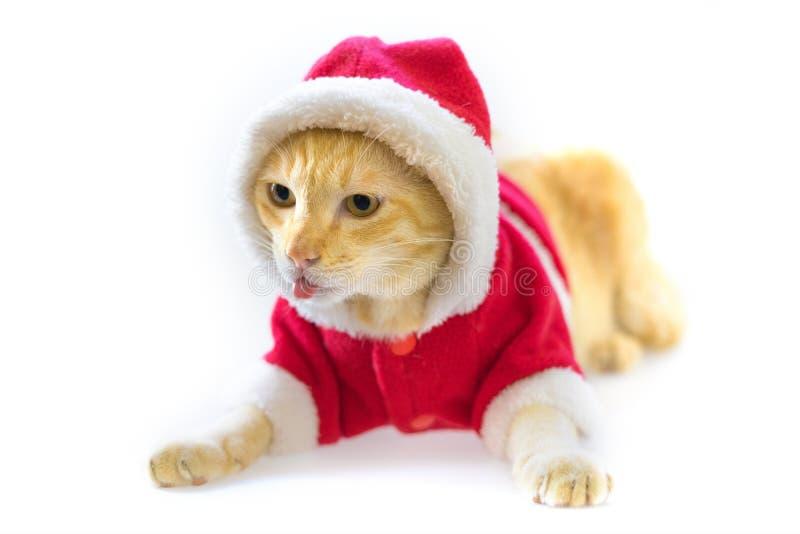 Lengua del gato y traje vestido de santa de la Navidad en el fondo blanco fotografía de archivo libre de regalías