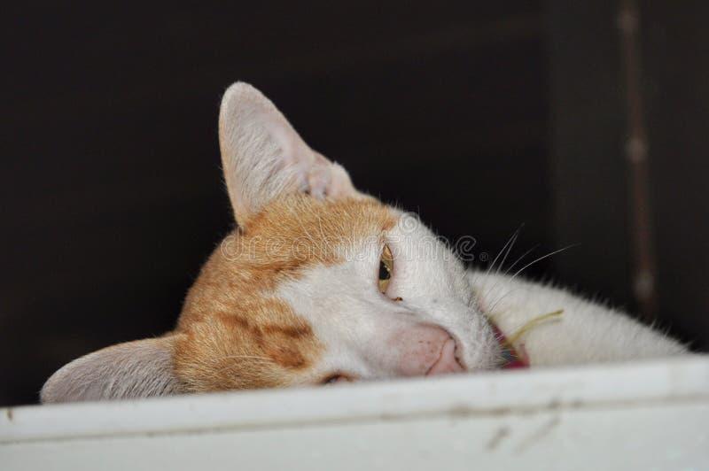 leniwy kot obrazy stock