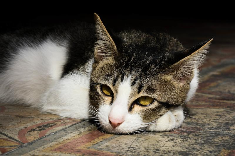 Leniwy kot w czystym dniu zdjęcie royalty free
