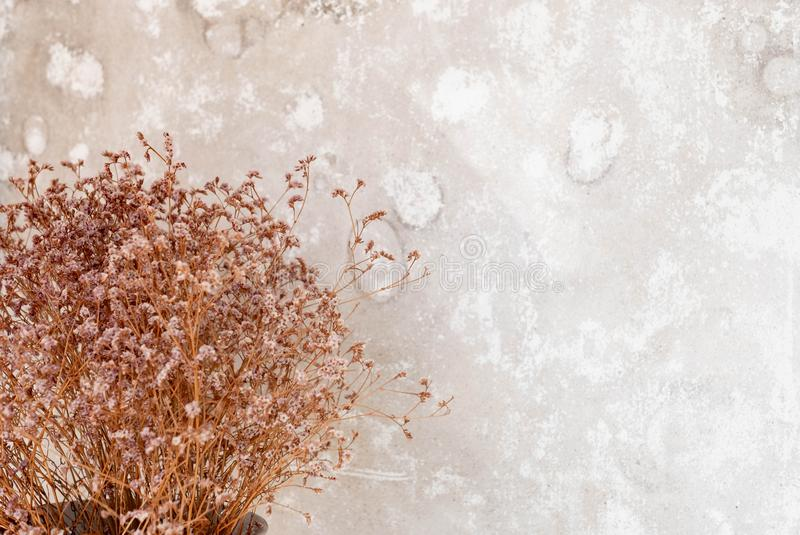 Lens blur Dry small flower bouquet  pastel beige background. Minimal lifestyle concept. Lots of free space on wall background for Design stock images