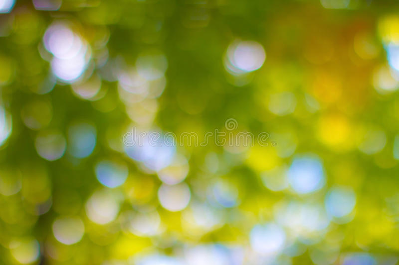 Lens blured natural background. Look from treetops forest stock photography
