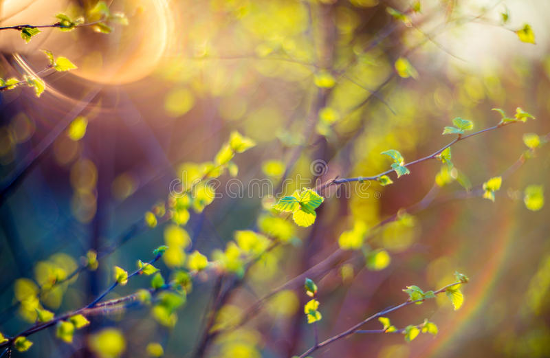 Lens flare nature green stock photography