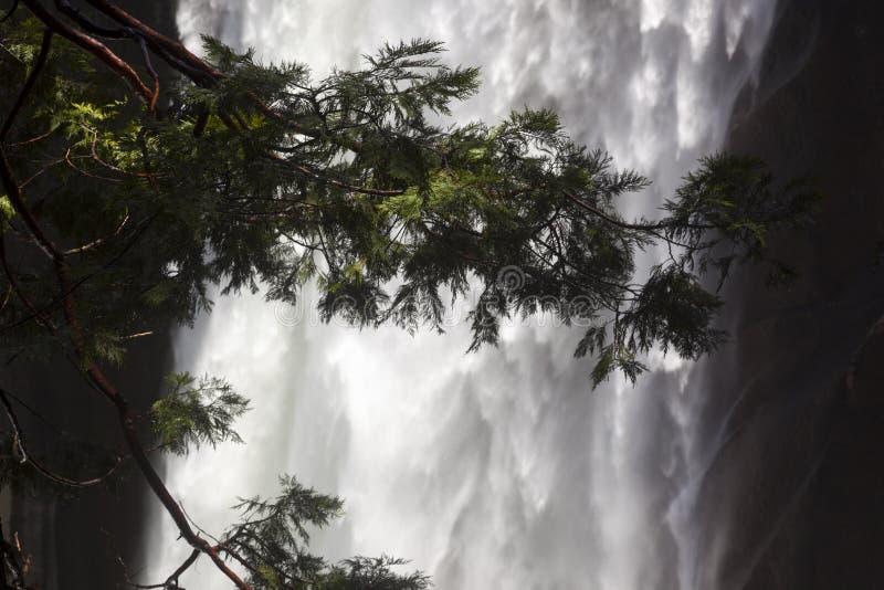 Lentedaling van Yosemite-vallei stock fotografie
