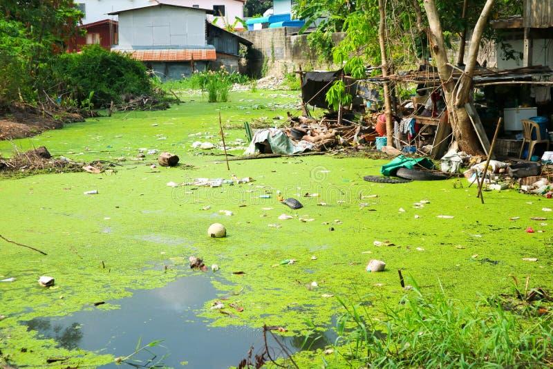 Lenteja de agua como indicador de la contaminación de agua imagen de archivo