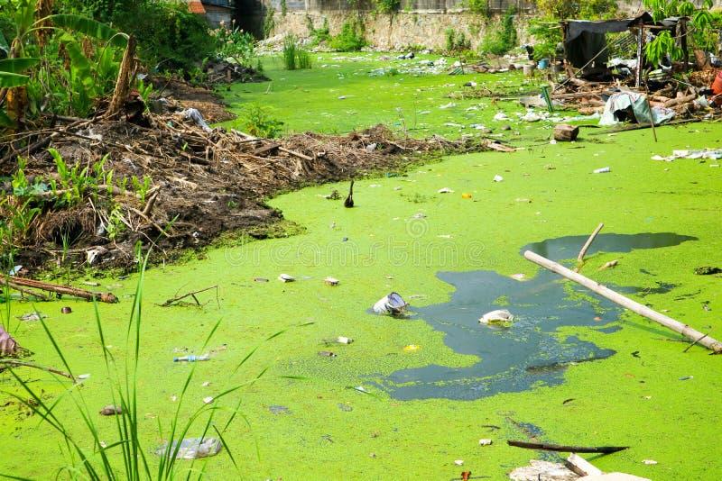 Lenteja de agua como indicador de la contaminación de agua fotografía de archivo libre de regalías