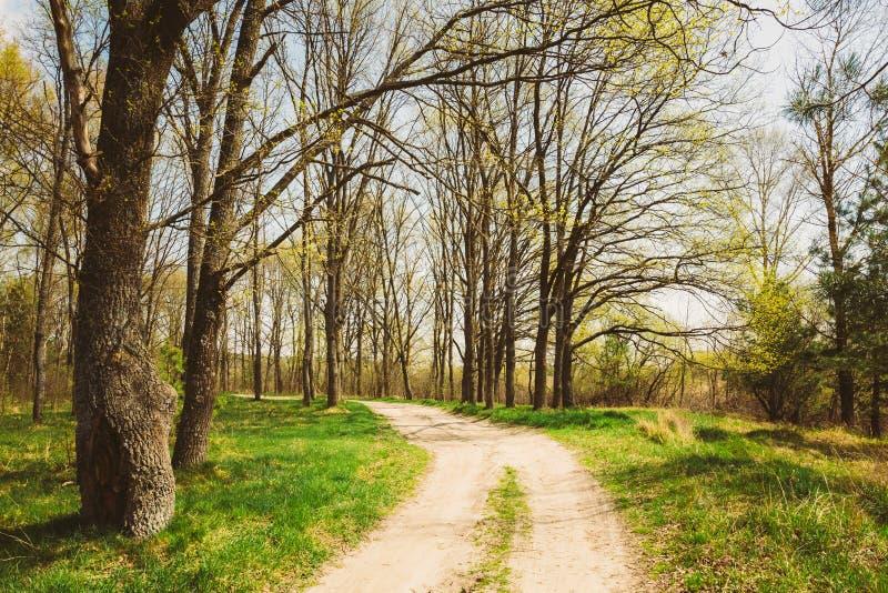 Lentetijd in Park Groen Jong Gras, Bomen op Blauwe Hemelrug royalty-vrije stock foto