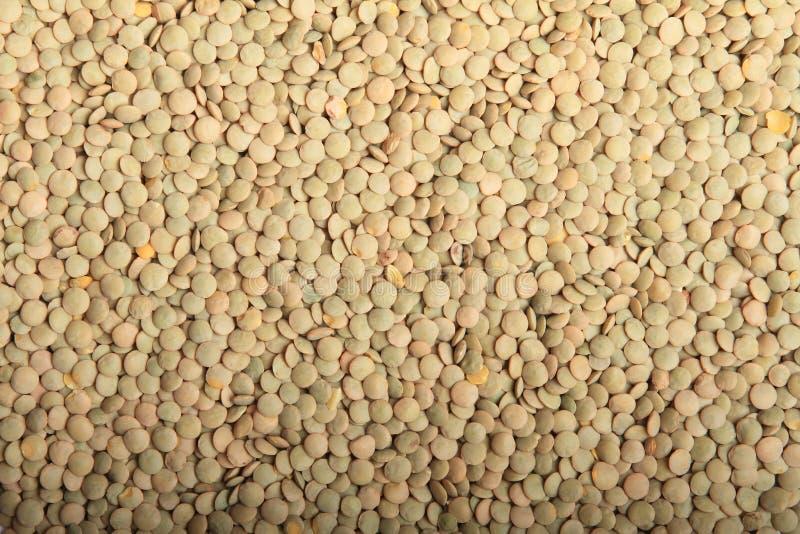 lenticchie fotografia stock