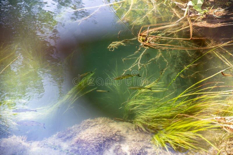 Lentille polarisée - lunettes de soleil vue, poisson sous l'eau photographie stock libre de droits