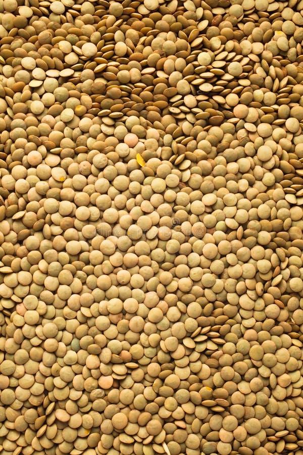 Download Lentils stock image. Image of brown, grain, health, ingredient - 29246421