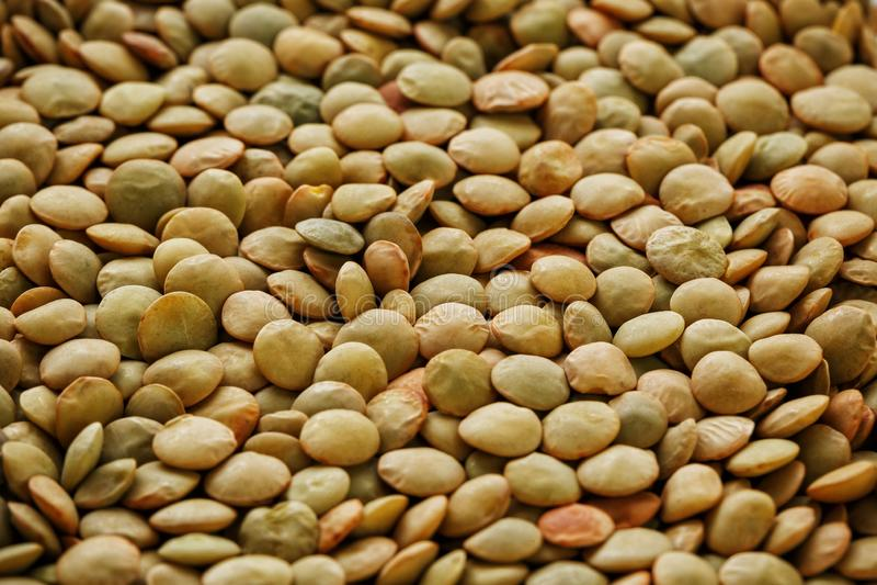 Lentils. Lentils background. Green lentils pattern. Natural organic lentils for healthy food stock image