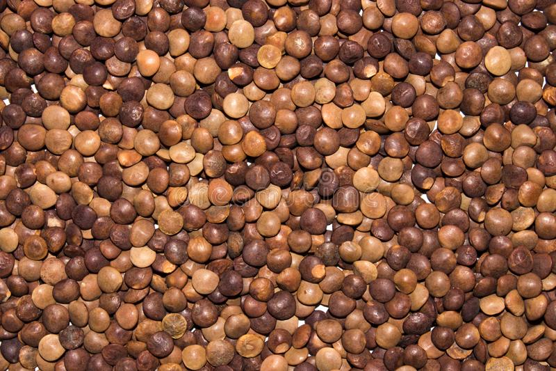 Lentils of food the view from the top. stock photo