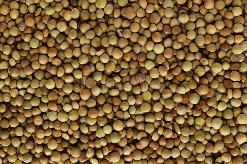 lentils Fundo das lentilhas Teste padrão verde das lentilhas imagem de stock royalty free