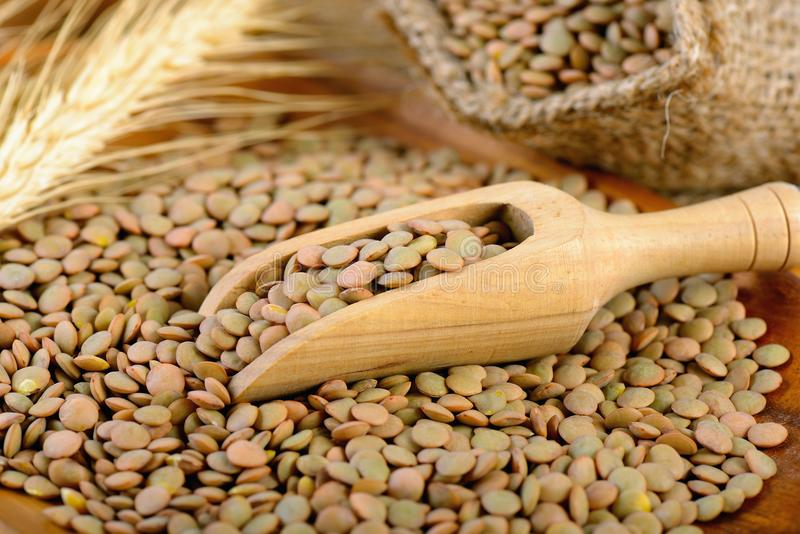 Lentils in the wooden scoop royalty free stock photo