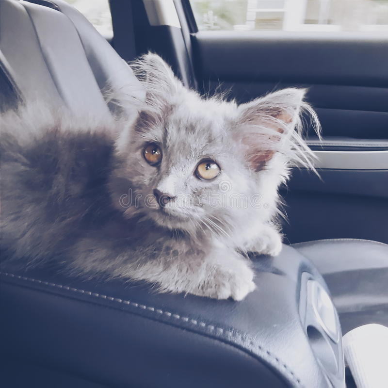 Leo η γάτα στοκ φωτογραφίες