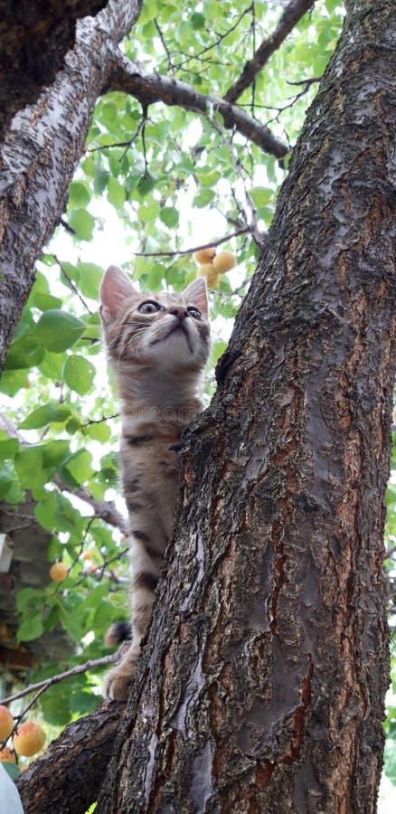 Leo cat royaltyfri fotografi