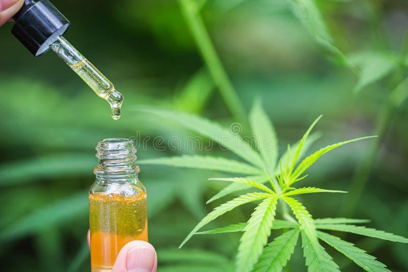 ?leo na folha do c?nhamo da m?o do doutor, medicina m?dica do cannabis da marijuana fotografia de stock