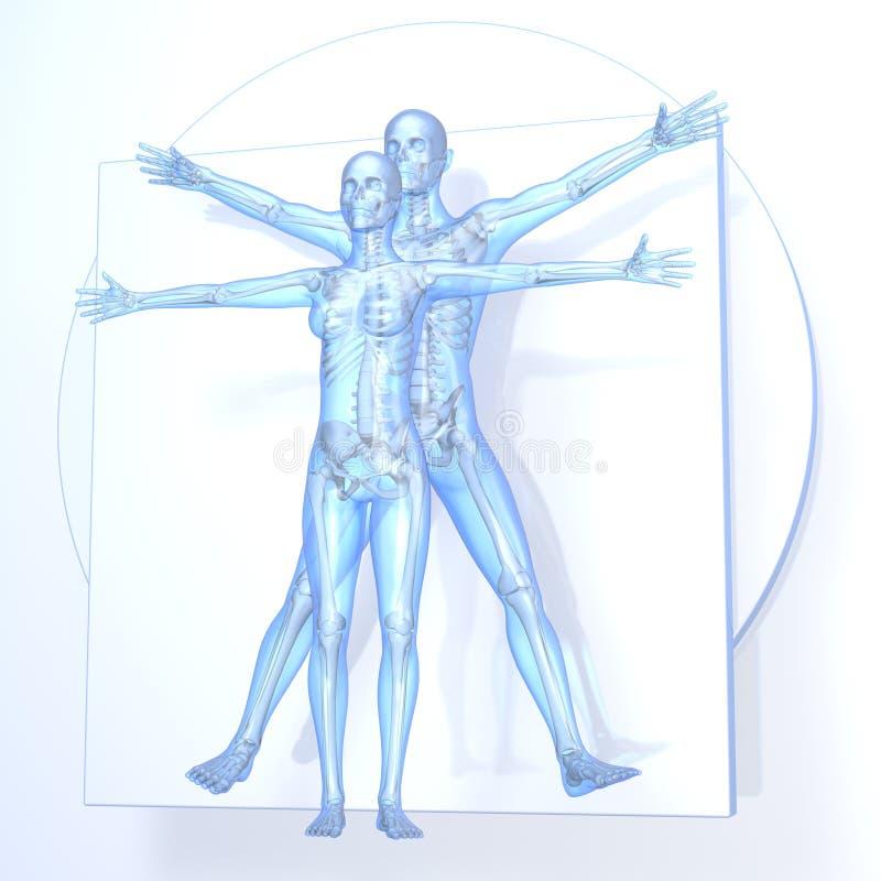 Leonardo Da Vinci Vitruvian Man En Vrouw, Paar Stock Illustratie ...