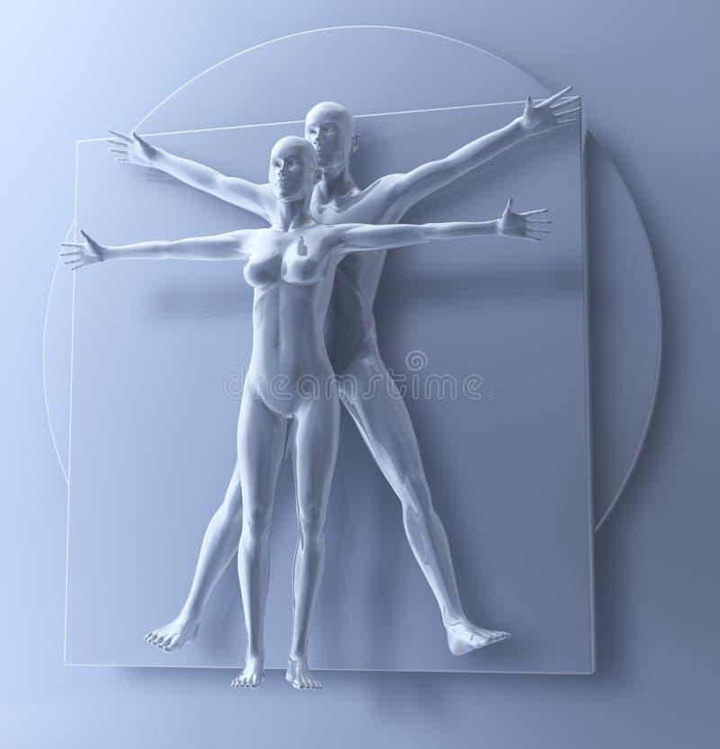 Leonardo da Vinci Vitruvian man och kvinna, HomoQuadratus par vektor illustrationer