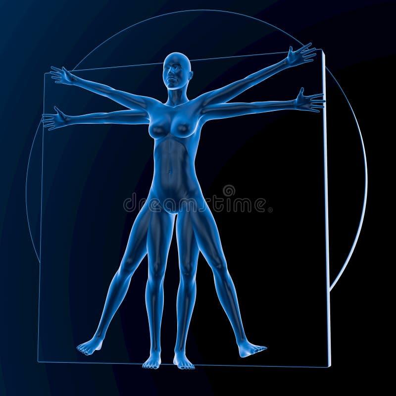 Leonardo da Vinci Vitruvian Woman vector illustratie