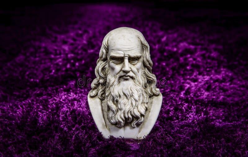 Leonardo purpur dywan obrazy royalty free