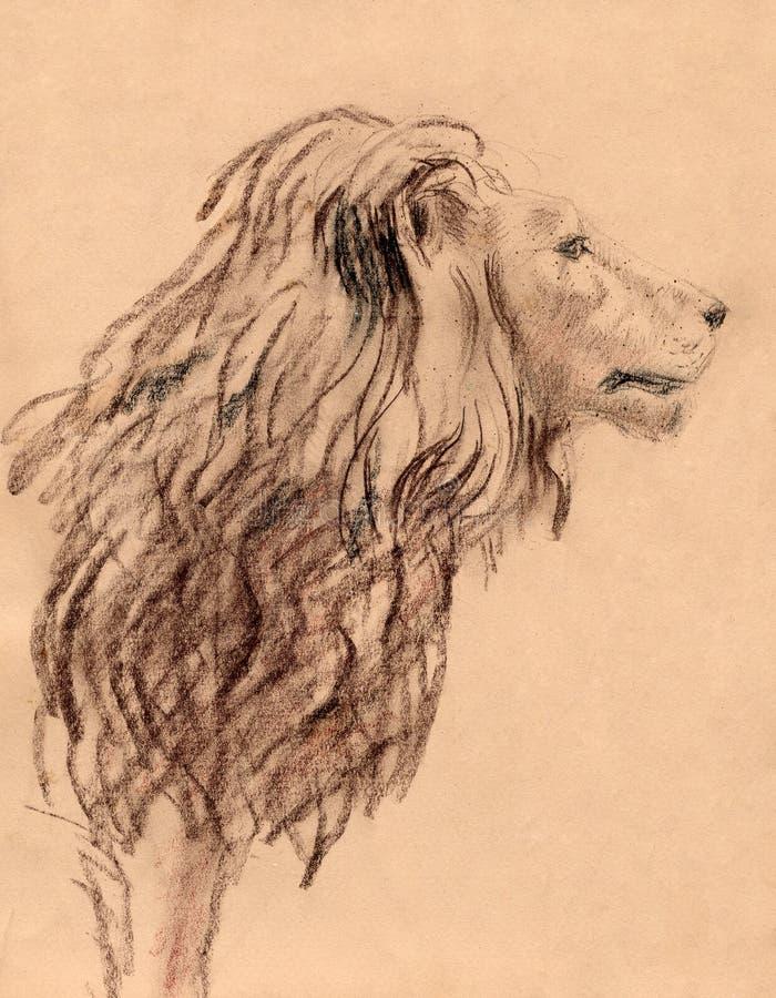 Download Leone illustrazione di stock. Illustrazione di rapace - 7314933