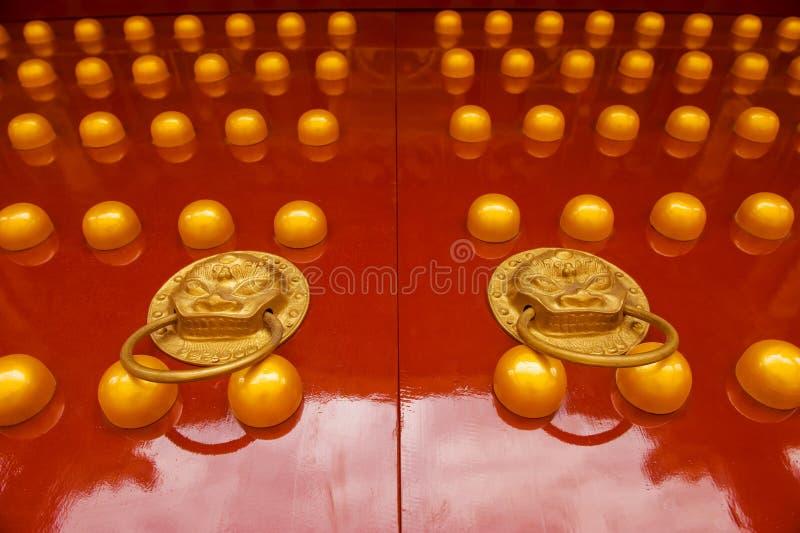 LEONE DORATO CINESE SUL PORTELLO ROSSO fotografie stock libere da diritti