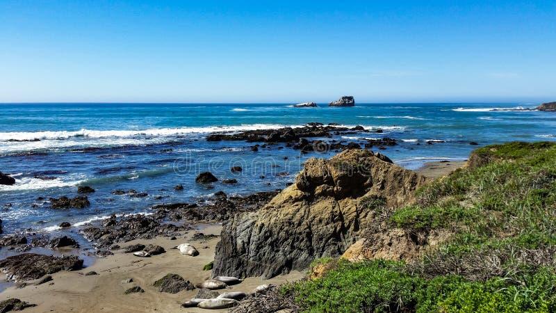Leones de la costa de California dando palmadas en la arena imagenes de archivo