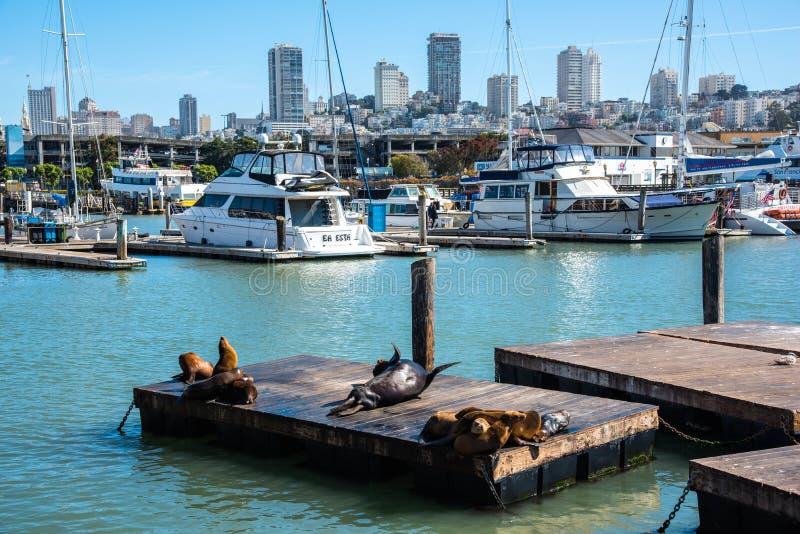 Leones de mar en el embarcadero 39 fotos de archivo libres de regalías