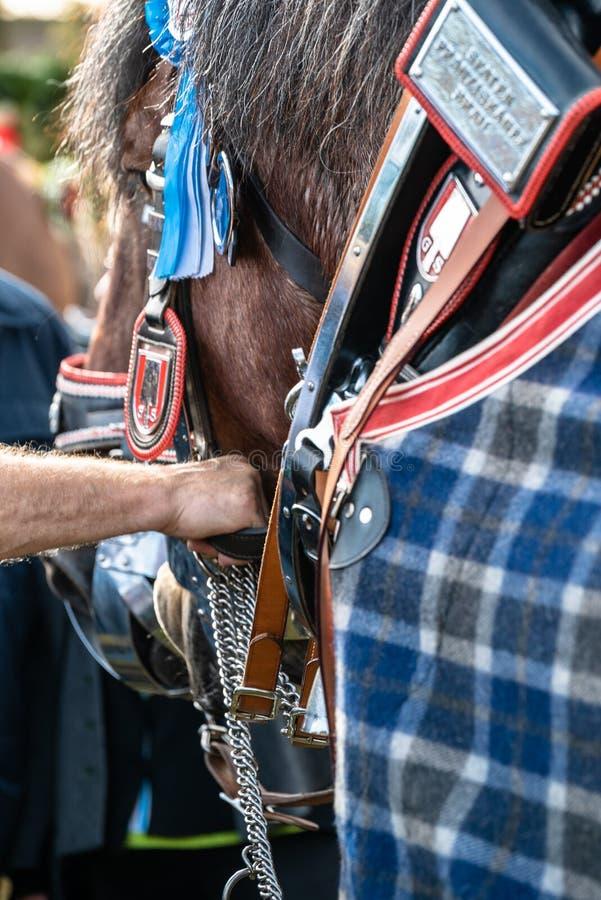 Leonhardi adornó los caballos blooded fríos grandes mún Toelz Alemania foto de archivo