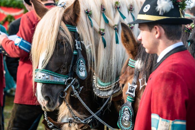 Leonhardi adornó los caballos blooded fríos grandes mún Toelz Alemania fotos de archivo