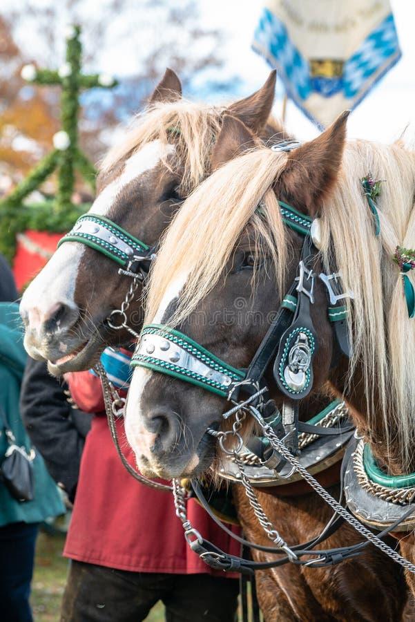 Leonhardi adornó los caballos blooded fríos grandes mún Toelz Alemania imágenes de archivo libres de regalías