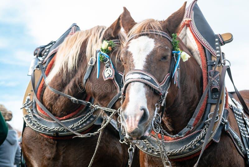 Leonhardi adornó los caballos blooded fríos grandes mún Toelz Alemania imagen de archivo libre de regalías