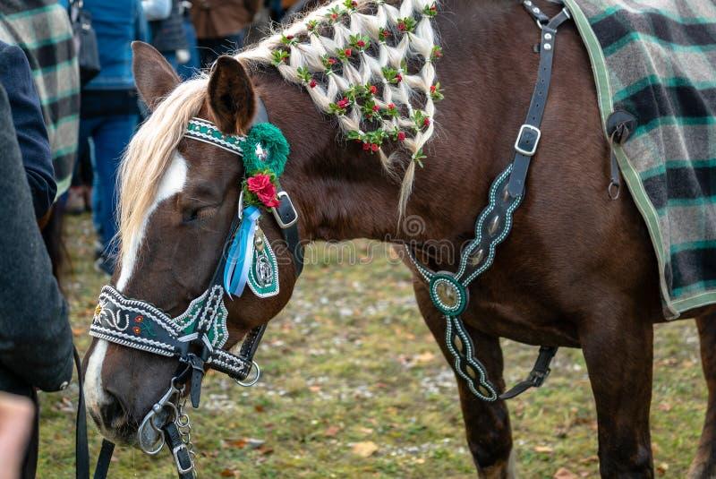 Leonhardi adornó los caballos blooded fríos grandes mún Toelz Alemania fotografía de archivo libre de regalías