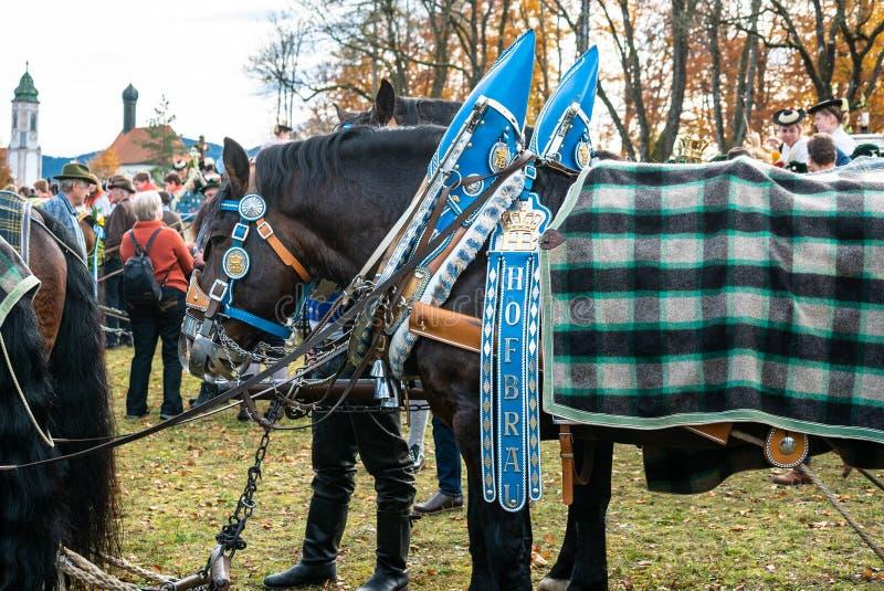 Leonhardi adornó los caballos blooded fríos grandes mún Toelz Alemania imagen de archivo