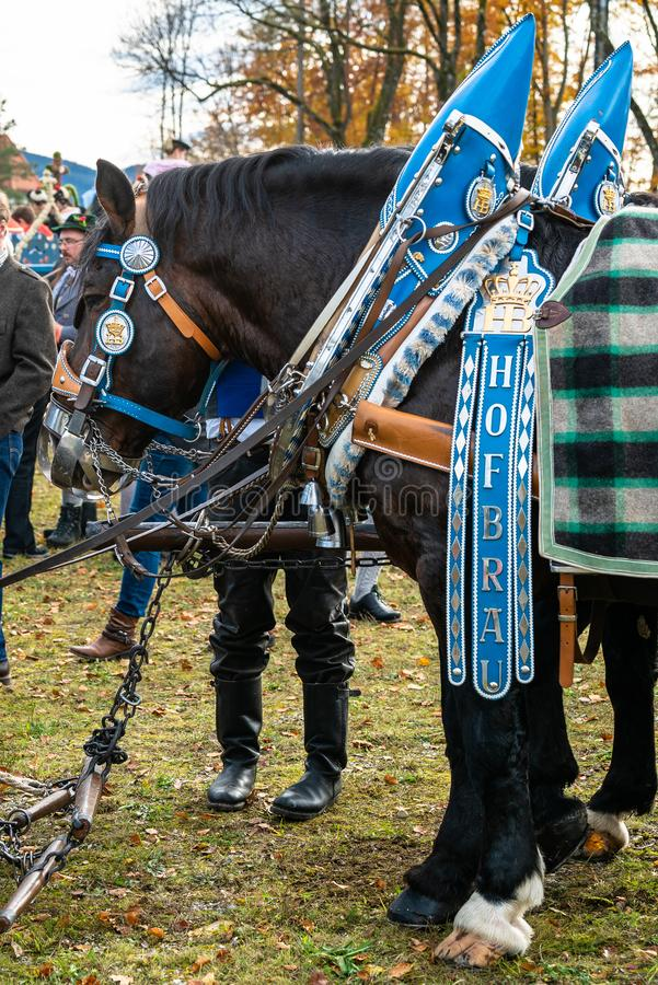 Leonhardi adornó los caballos blooded fríos grandes mún Toelz Alemania fotos de archivo libres de regalías
