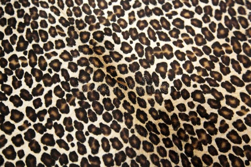Leopard πρότυπο στοκ εικόνες με δικαίωμα ελεύθερης χρήσης